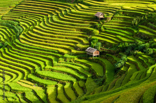 Tuinposter Rijstvelden The terraced rice paddy in Mu Cang Chai district of Yen Bai province, north Vietnam.