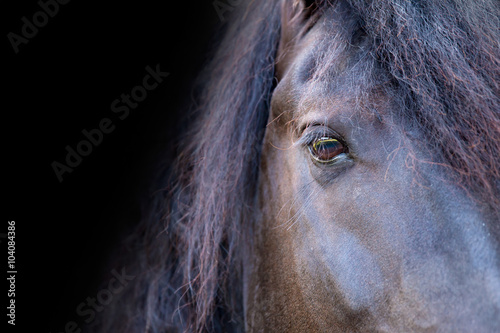 Poster Close up of a Friesian / Frisian stallion horse eye in autumn fall with red boke