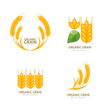 Set of organic wheat grain icons. Vector logo or label design elements. Cereals flat illustration. Concept for organic products, harvest and farming, grain, bakery, healthy food. - 104105546