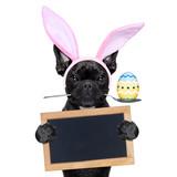Fototapety easter bunny dog