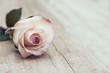 Leinwanddruck Bild - Vintage Rose