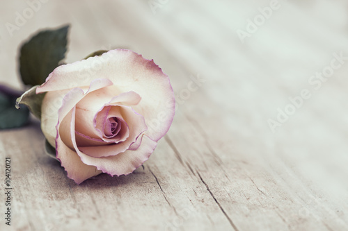 Leinwanddruck Bild Vintage Rose