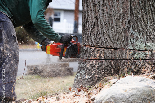 Zdjęcia na płótnie, fototapety, obrazy : working man cutting tree trunk with chainsaw in residential area