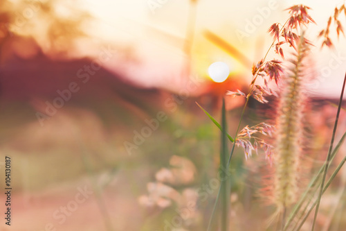 Poster Romantic pink colour tone nature view of grass flower and sunset