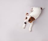Fototapety Puppy