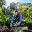 picking beets in urban communal garden