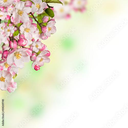 In de dag Bloemen Cherry blossoms over blurred nature background