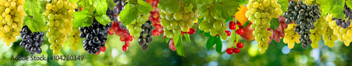 mata magnetyczna ripe grapes on a green background in the garden