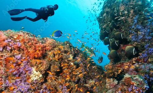 obraz lub plakat Scuba diver explore a coral reef