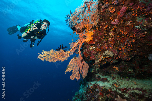 Poster Scuba diver explore a coral reef showing ok sign