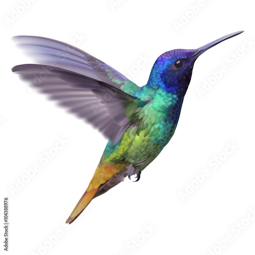 Hummingbird - Golden tailed sapphire. Hand drawn vector illustration of a flying Golden tailed sapphire hummingbird with colorful glossy plumage on transparent background. - 104388976