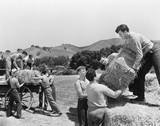 Men working on a farm loading hay  - 104439772