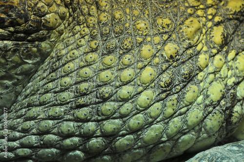 Poster Crocodile skin