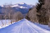 雪道と並木