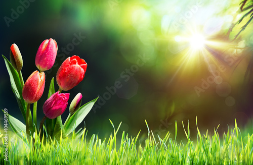 Tulips On Grass In Sunny Meadow With Sunbeam
