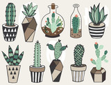 Vector set with succulents flowers and glass terrariums.