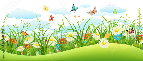 Summer landscape banner with meadow flowers, grass and butterflies - 104479333