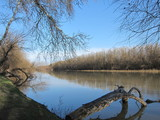 Trees at the delta of Danube river in the early spring on a sunny day