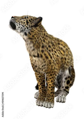 Papiers peints Hyène Big Cat Jaguar on White