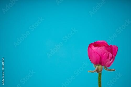 Zdjęcia na płótnie, fototapety, obrazy : spring flower background