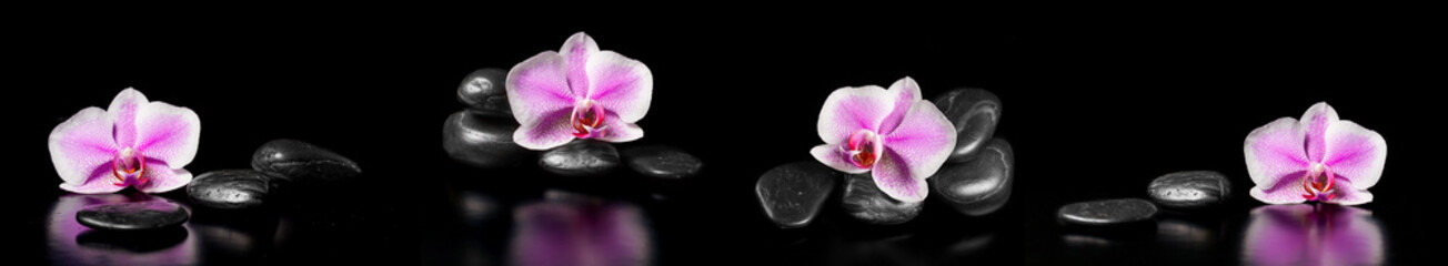 Horizontal panorama with pink orchids and zen stones on black ba
