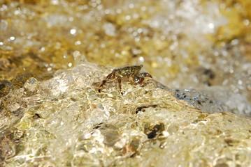 Krab zalany falą