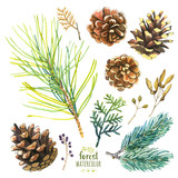 Fototapety Watercolor illustration with branches, berries and cones.