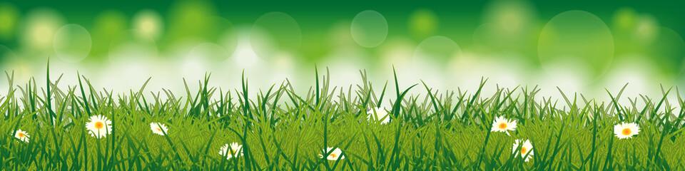 Frühlingswiese mit Blumen - Hintergrund (in Grün)