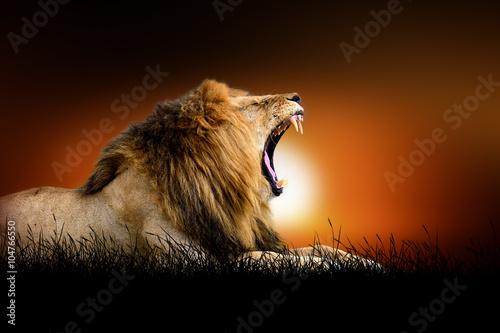 Fototapeta Lion on the background of sunset