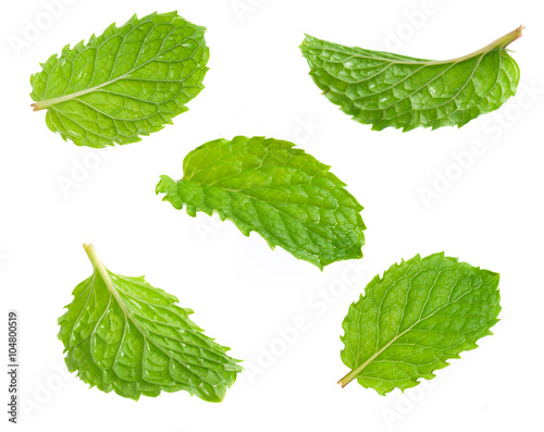 Poster Fresh mint isolated on white. Collection