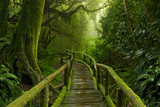 Fototapety Jungla de Nepal con puente de madera
