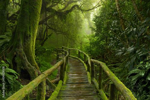 Jungla de Nepal con puente de madera Poster