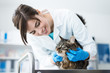 Veterinarian examining a cat