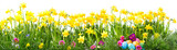 Fototapety Beautiful easter background with spring flowers and eggs isolated on white background