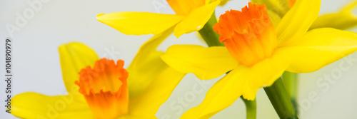 Panel Szklany gelb - orange farbende osterblumen