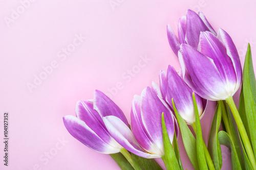 Zdjęcia na płótnie, fototapety na wymiar, obrazy na ścianę : Purple tulips on pink background