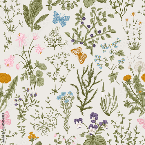 Vector vintage seamless floral pattern. Herbs and wild flowers. Botanical Illustration engraving style. Colorful - 104961985
