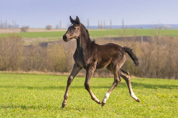 Bay foal play
