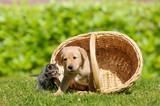 Hund und Katze mit Korb auf der Wiese