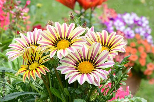 Fotobehang Purper Blumen 551