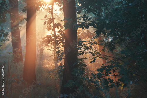 morning fog in the forest © Alikssa