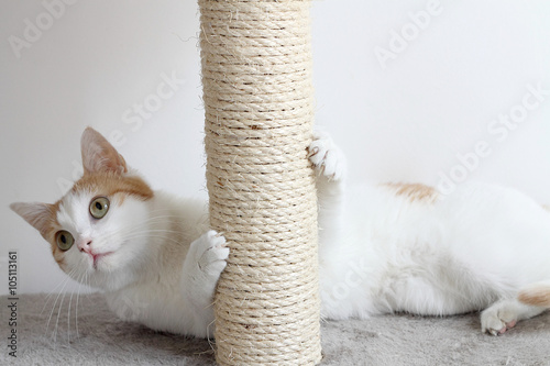 Poster Red and white cat and scratching post