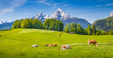 Fototapety Idyllic landscape in the Alps with cows grazing on green meadows in spring