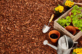 Garden tools and seedlings with copy space - 105186584