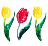 3 tulips - 105198721