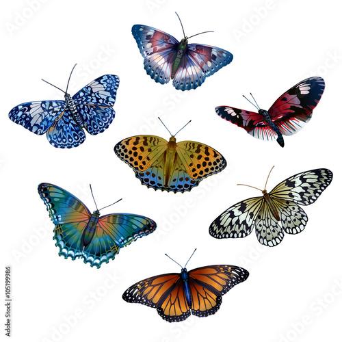 bright butterflies - 105199986