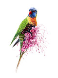 Multi-colored parrot on a pink flower. Watercolor hand drawing illustration.