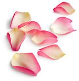 Fototapety Rose petals