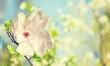 Obrazy na płótnie, fototapety, zdjęcia, fotoobrazy drukowane : Spring.
