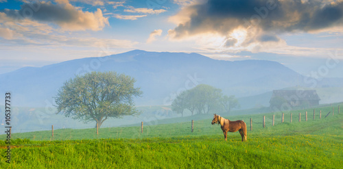 Horse on a meadow Poster